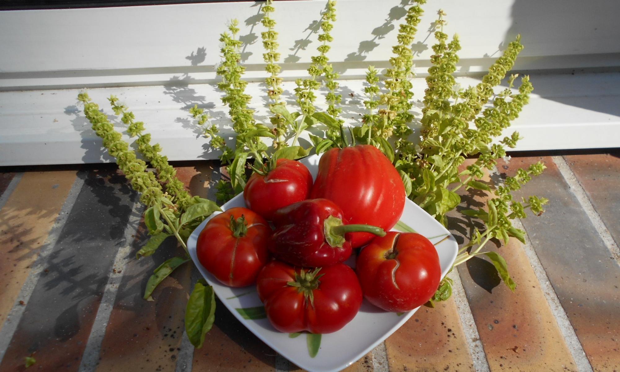 La récolte de notre potager